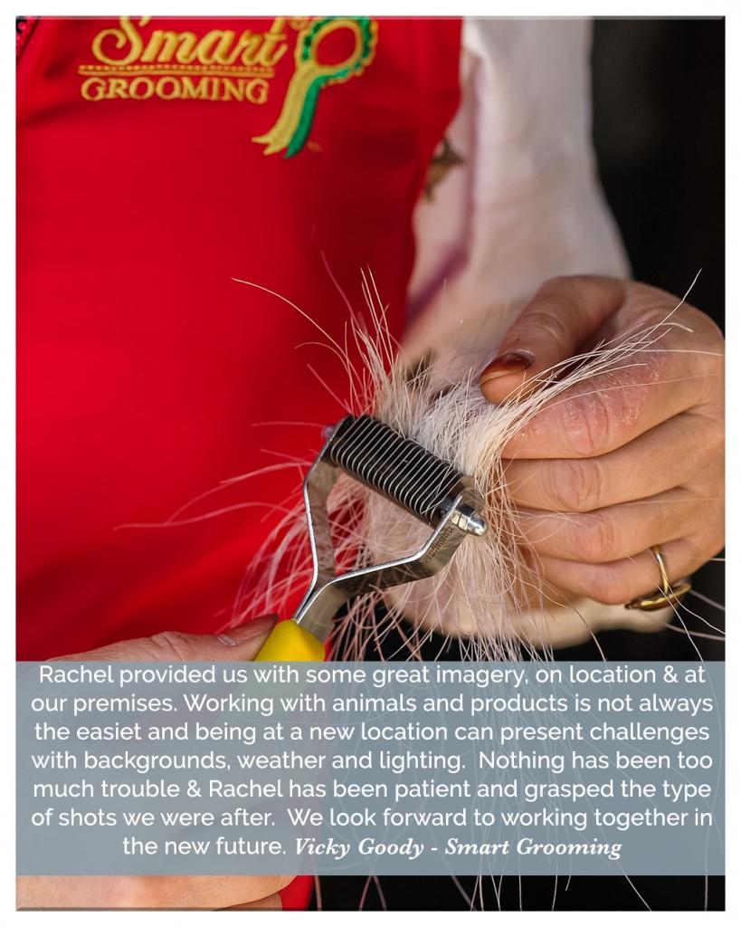 Review for horse photographer Sweet-Images Photography in Somerset UK